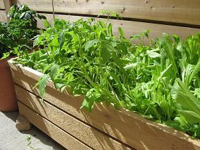Cabbage Patch Garden